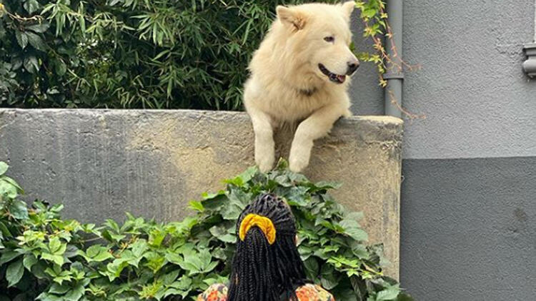 Halsey, Kuzguncuk'un maskot köpeği Rocky'le